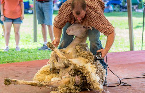 Sports Shear Tasmania